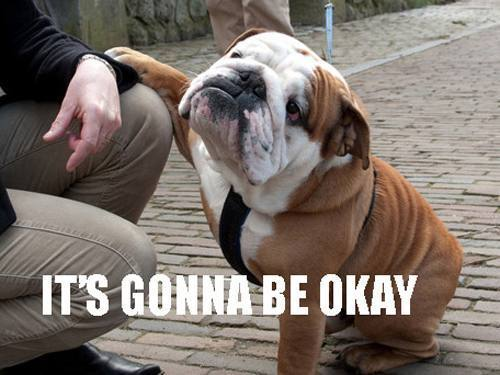 bulldog comforting